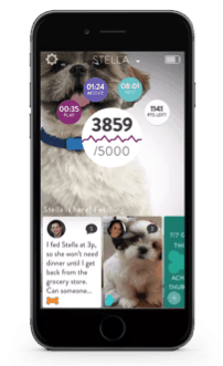 fitbark fitness wearable for dogs